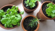 Inside herbs.